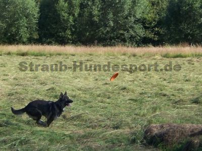 Dogfrisbee - Spiel und Sport mit der Hundefrisbee