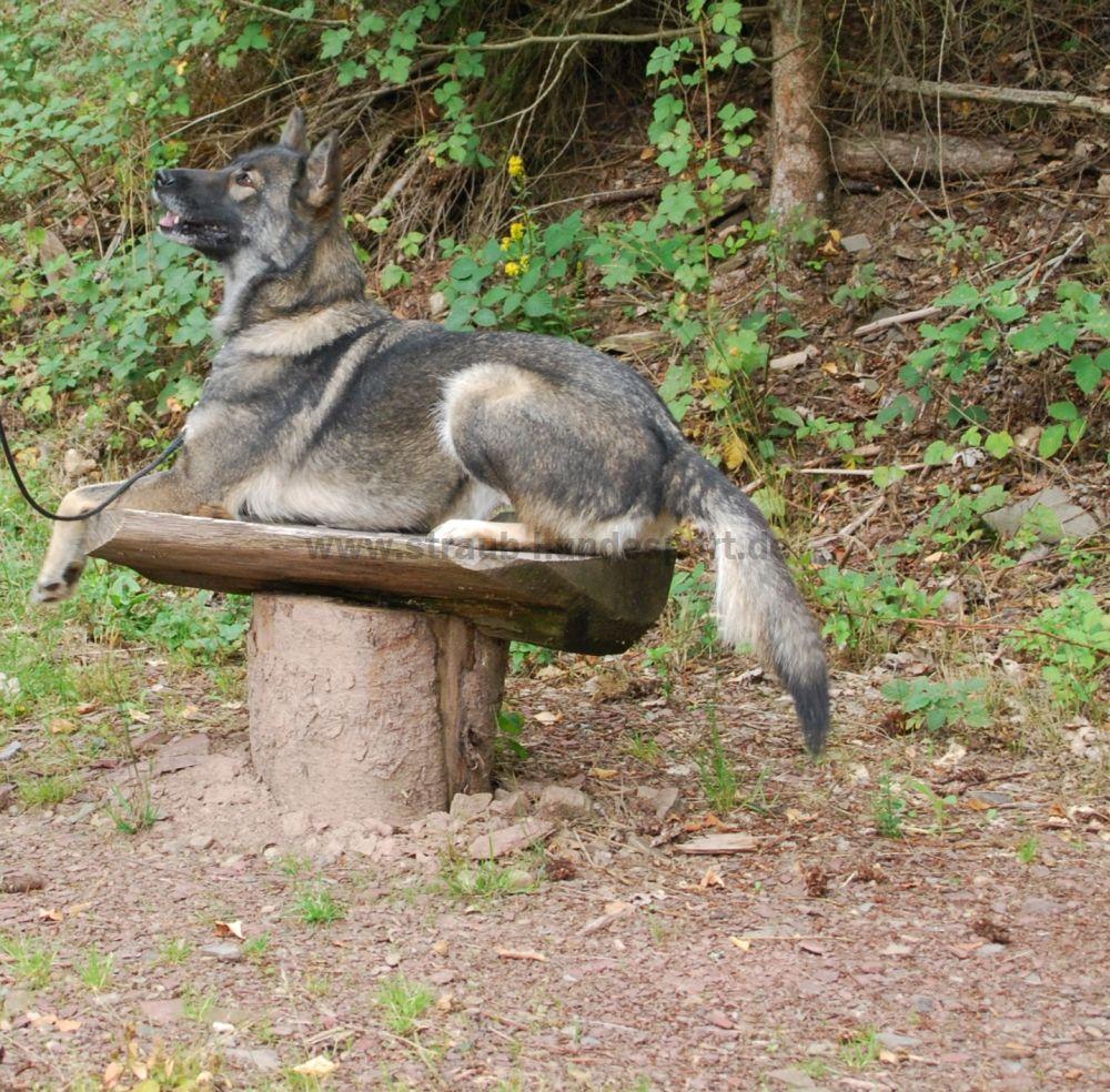 Hunderlebnispfad Station4