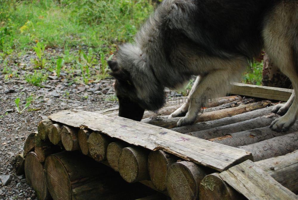 Hunderlebnispfad Station5