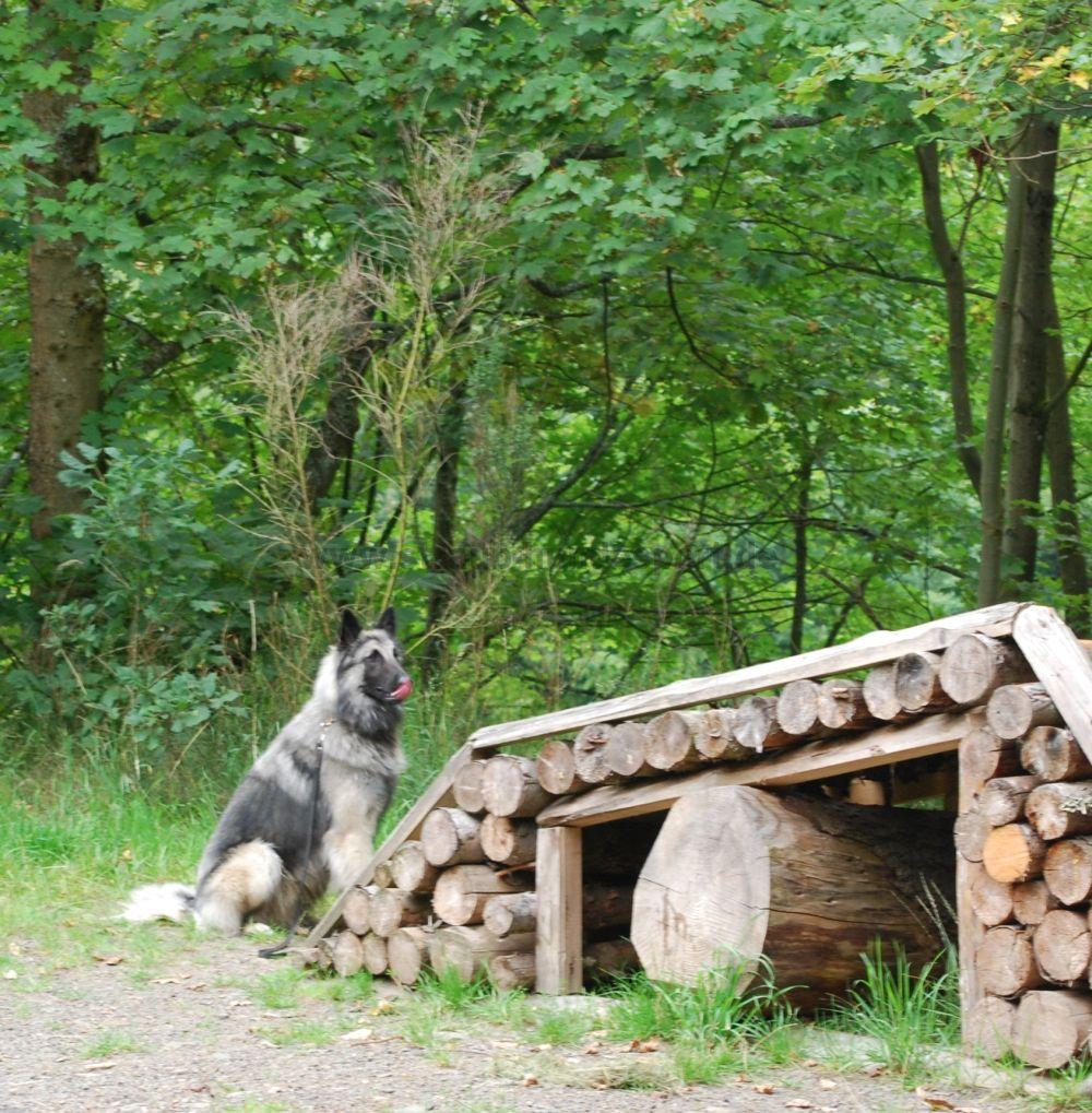 Hunderlebnispfad Station1
