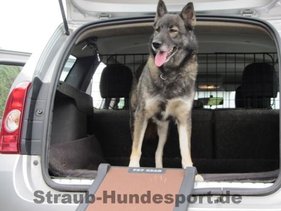 kompakte Hunderampe aus Kunststoff
