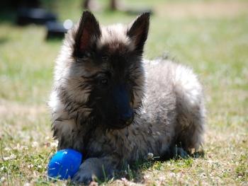 Hundespielzeug - Bälle, Fun-Mot und Dog Frisbees bei Straub-Hundesport