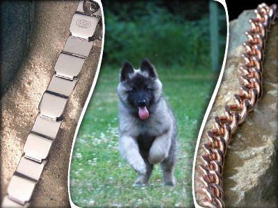 Hundesport-Straub - Sicherheit durch gutes Equipment