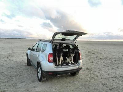 Das Auto von Straub Hundesport mit Eos und Candy auf Römö