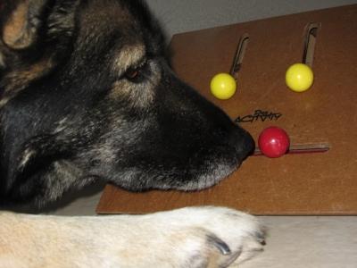 Straub-Hundesport bietet jetzt auch Intelligenzspielzeug für Hunde