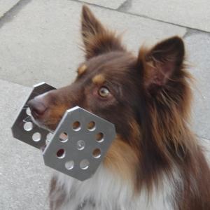 Metallapportel von Straub-Hundesport.de