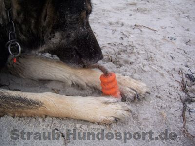 Mini-Mot Hundespielzeug nach Ekard Lind!