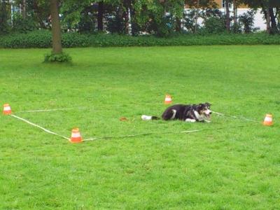 Obedience Hundesportartikel