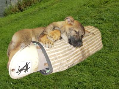 Schutzhund für den Schutzdienst der Zukunft!