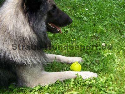 Tryball - das ultimative Hundespielzeug für Hundesport und Freizeit