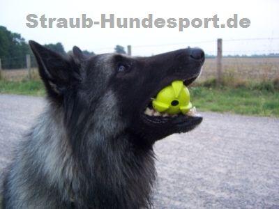 Tryball - der Ball für Hundesportler und Hundebesitzer