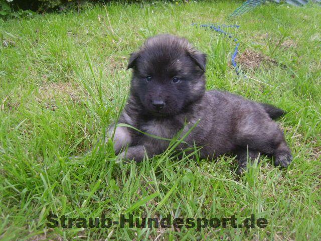 Alles für Welpen - Straub-Hundesport.de